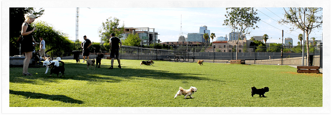 Downtown Phoenix Dog Park