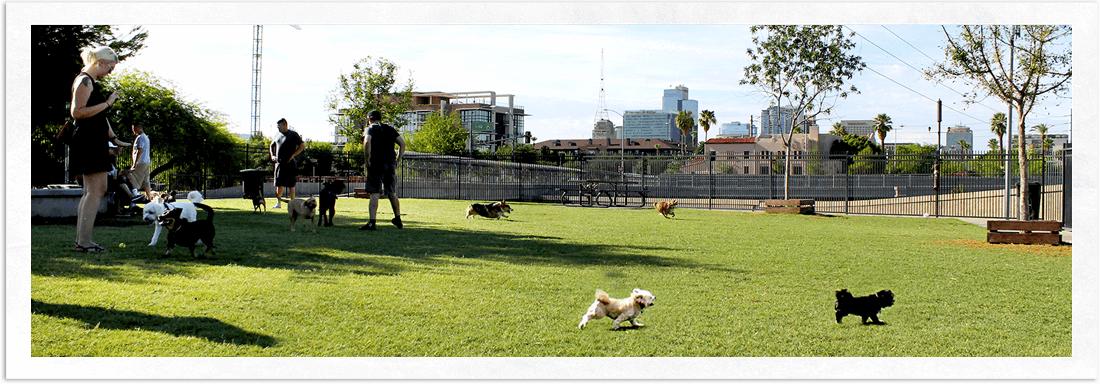 Downtown Phoenix Dog Park